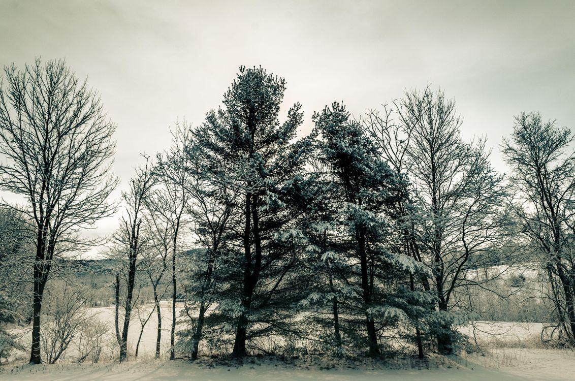 Фото бесплатно природа, зима, ветки - на рабочий стол