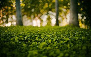 Фото бесплатно капли, зелень, деревья