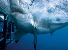 Фото бесплатно акула, море, атака