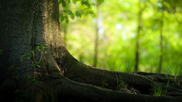 Бесплатные фото дерево,старое,корни. земля,природа
