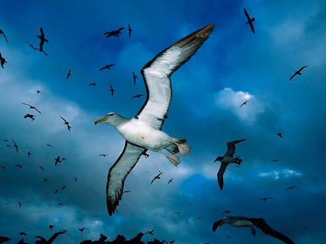 Фото бесплатно птица, чайки, небо