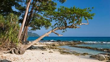 Заставки берег, остров, дерево, природа