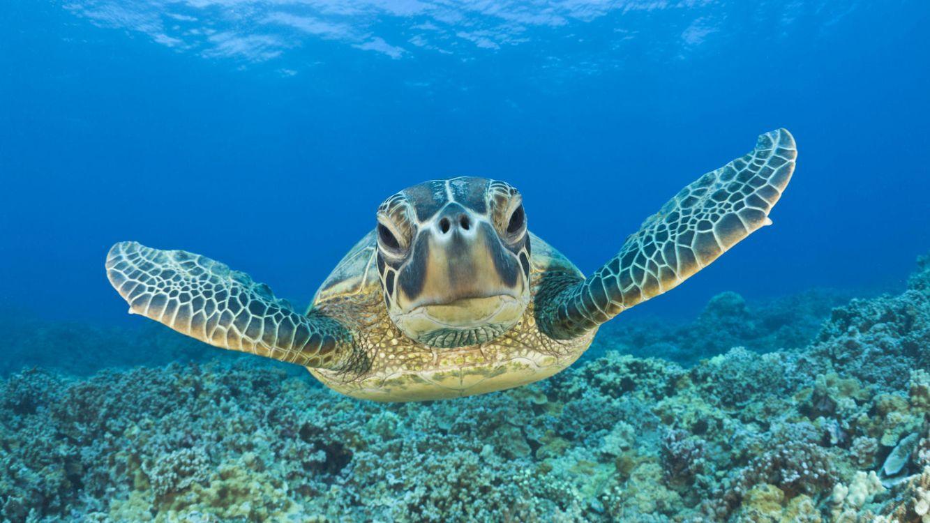 Обои черепаха, морская, дно картинки на телефон