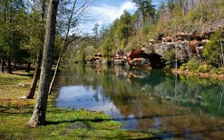 Фото бесплатно природа, листья, парк