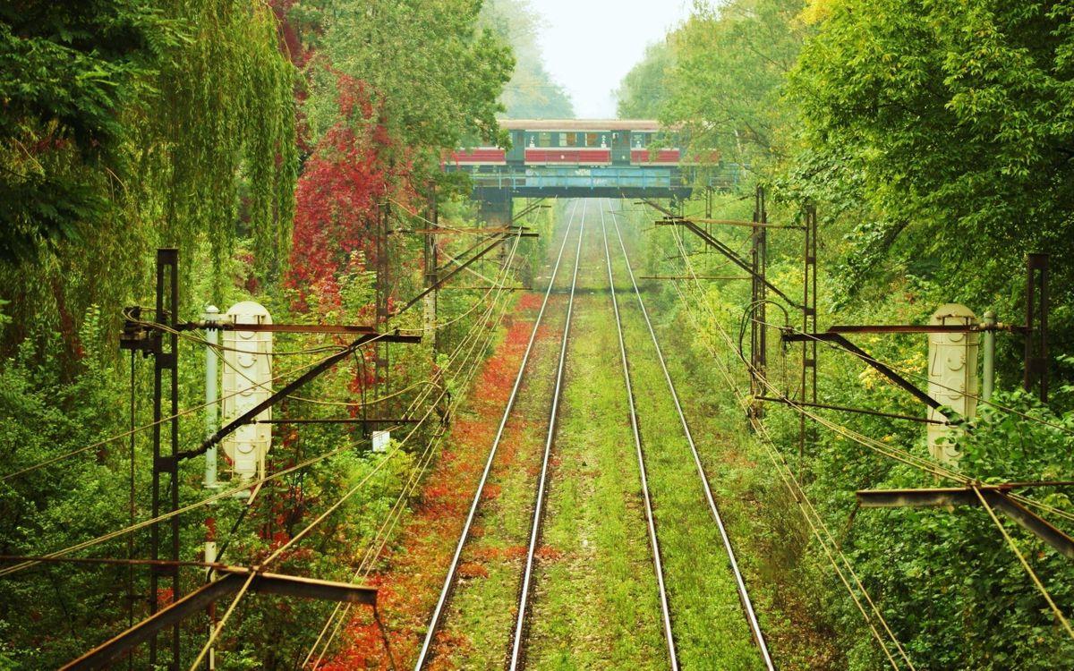 Фото бесплатно деревья, кусты, рельсы, железо, поезд, трава, зелень, лес, парк, железная дорога, мост, провода, фары, природа, природа