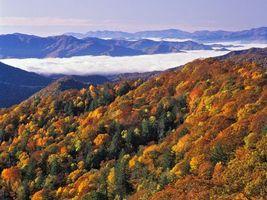 Бесплатные фото деревья,трава,вода,скалы,пена,пейзажи,природа