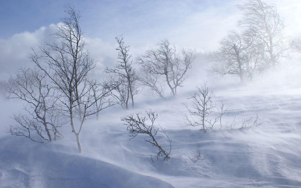 Фото бесплатно метель, зима, снег, ветер, деревья, природа, природа