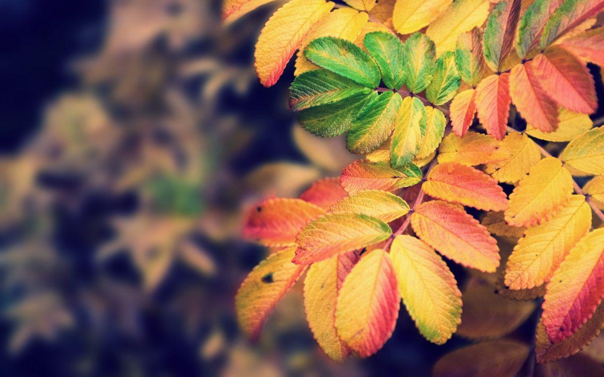 Фото бесплатно листья, красный, желтый, размытость, зеленый, трава, пейзажи, природа, природа