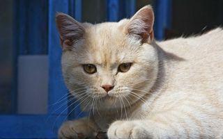 Бесплатные фото кот,котенок,шерсть,пух,уши,нос,усы