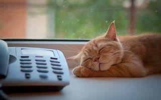 Фото бесплатно кот, спит, телефон