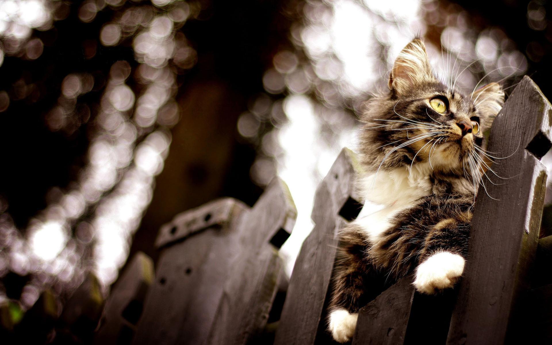 Обои кот, забор, сидит, охотится