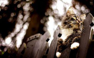 Бесплатные фото кот,забор,сидит,охотится,лапы,шерсть,усы