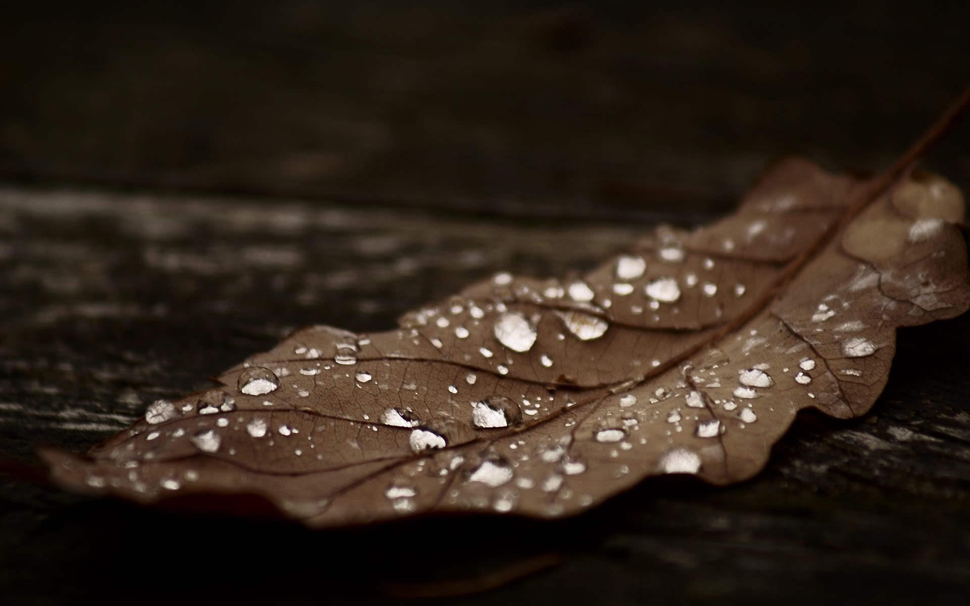 лист, сухой, прожилки