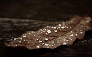 Фото бесплатно лист, сухой, прожилки