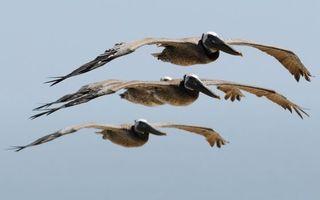 Бесплатные фото небо,летят,несколько,три,крылья,клювы,птицы