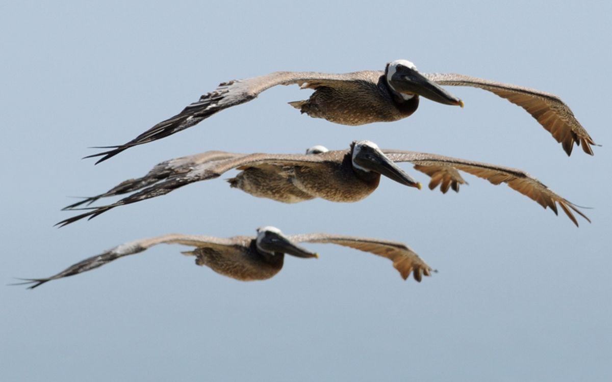 Фото бесплатно небо, летят, несколько, три, крылья, клювы, птицы, птицы