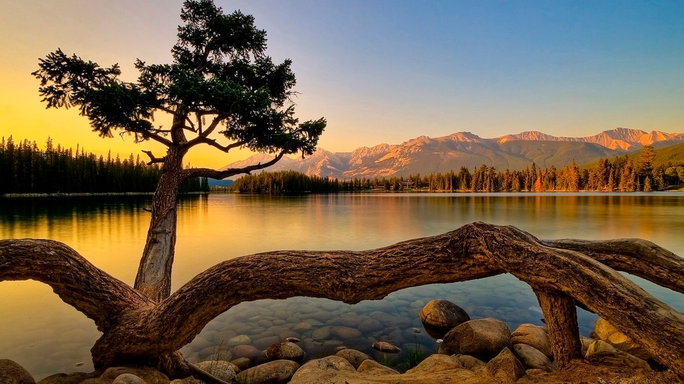 Фото бесплатно небо, горы, скалы, деревья, лес, сосна, кора, камни, вода, река, пейзажи, пейзажи