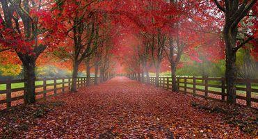 Бесплатные фото Норт-Бенд,Вашингтон,осень,дорога,деревья,пейзаж