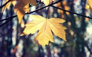 Фото бесплатно осень, листок, клен