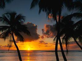 Бесплатные фото пальмы,море,песок,вечер,красиво,солнце,природа