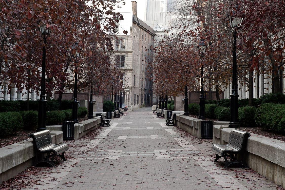 Фото бесплатно парк, деревья, листва - на рабочий стол