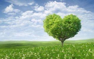 Бесплатные фото поле,трава,холмы,дерево,крона,сердце,небо