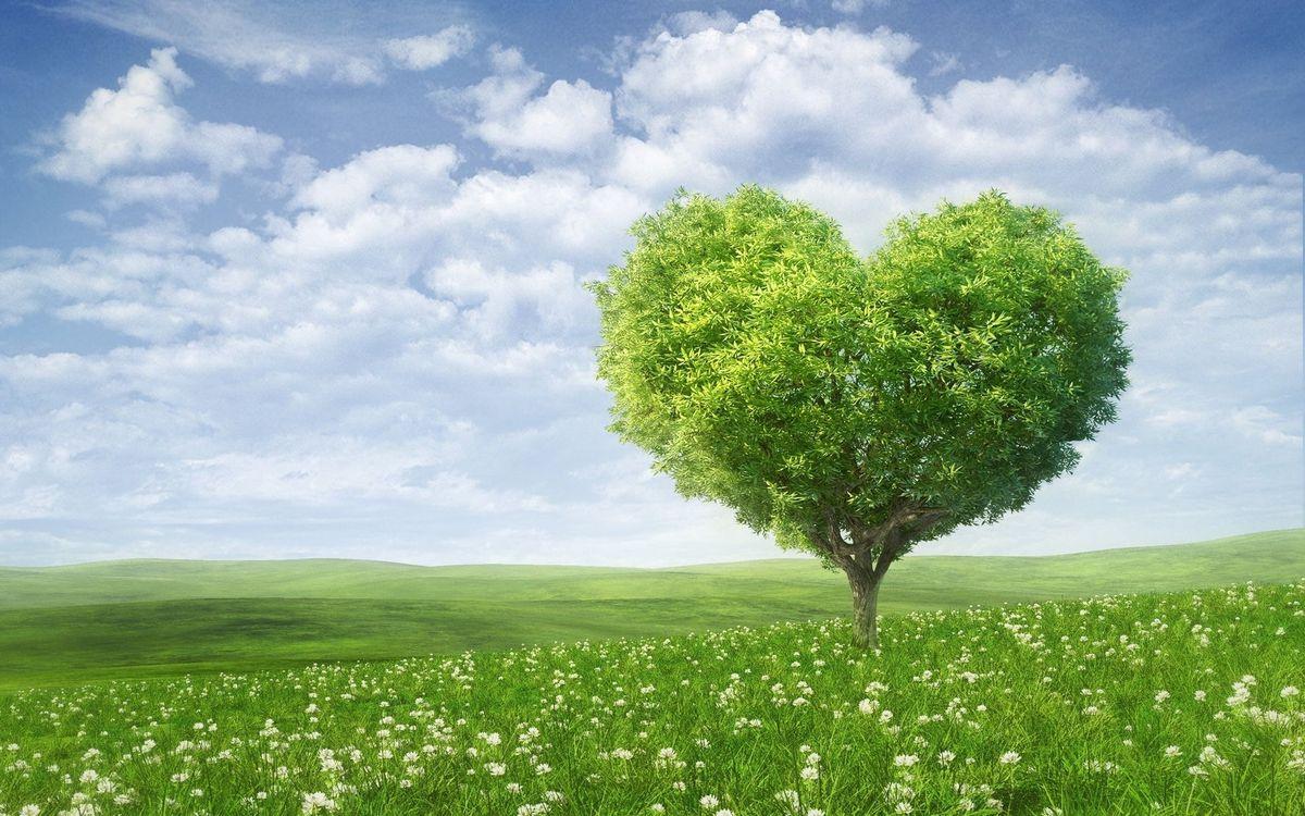 Обои поле, трава, холмы, дерево, крона, сердце, небо, облака, заставка, пейзажи на телефон | картинки пейзажи - скачать