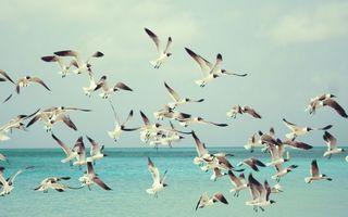 Бесплатные фото птицы,природа,море,стая,океан