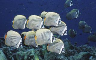 Обои рыбки, плавники, глаза, чешуя, рот, стая, водоросли, вода, глубина, подводный мир