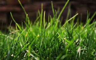 Фото бесплатно трава, газон, листья
