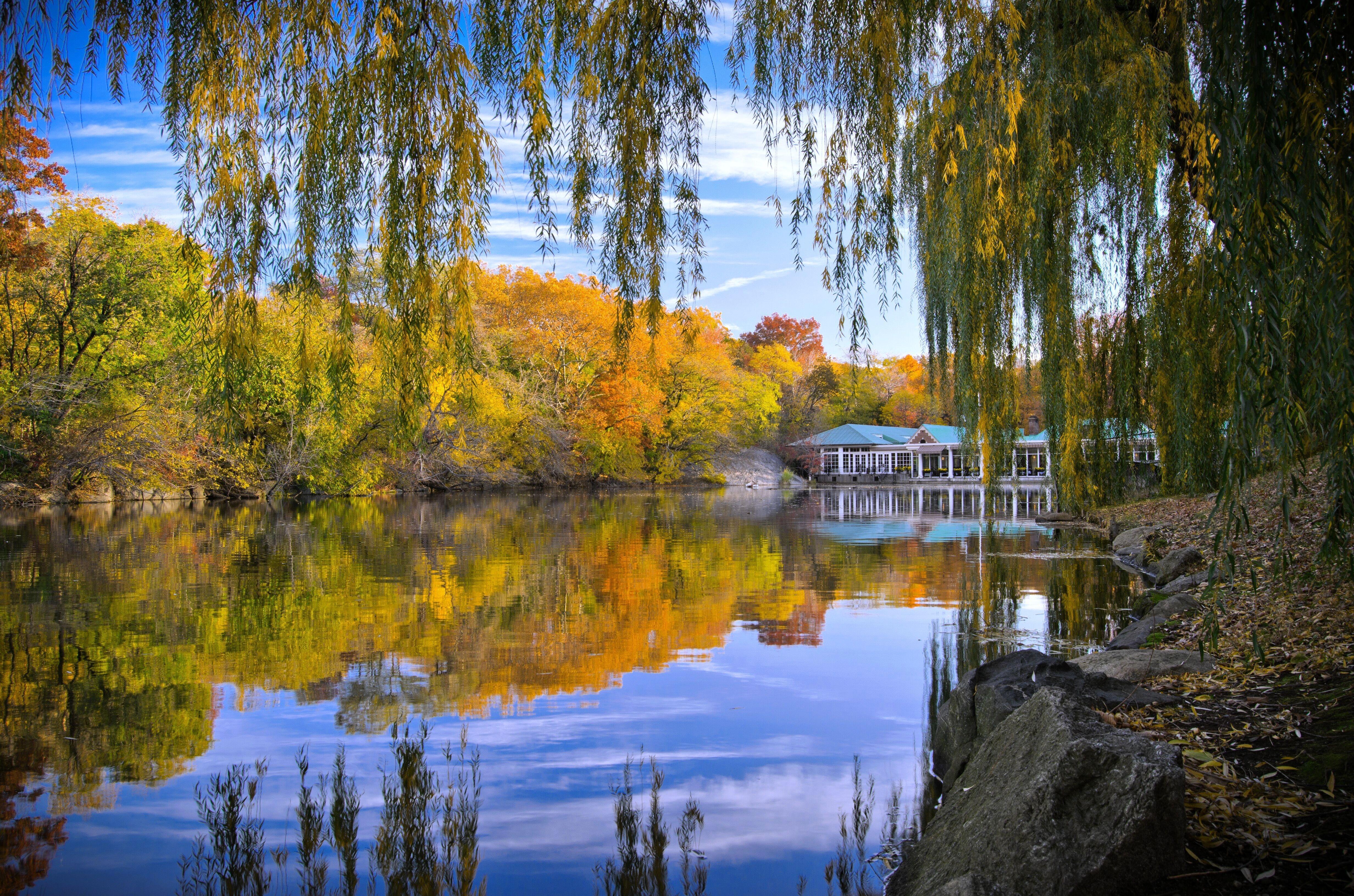 Обои центральный парк нью-йорка, осень, пруд, деревья