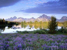 Заставки вода, озеро, цветы, трава, деревья, елки, горы, вершины, пейзажи, природа