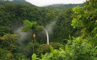 Бесплатные фото впадина,овраг,лес,деревья,пальма,водопад,вода