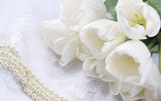 Бесплатные фото цветы,тюльпаны,букет,жемчуг,бусы,белые,кружево
