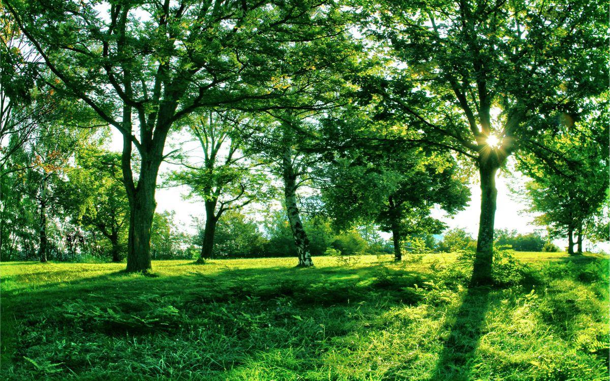 Фото бесплатно лето, парк, деревья - на рабочий стол