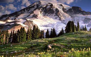 Заставки гора,снег,холм,лес,растения,зелень,небо