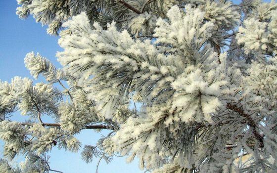 Фото бесплатно ветки елки, в снегу, иголки