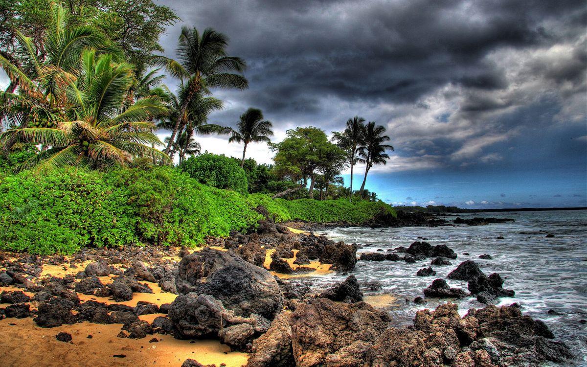 Фото бесплатно облака, пальмы, море - на рабочий стол