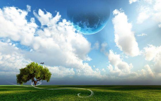 Фото бесплатно дерево, кора, ствол, листья, крона, небо, голубое, облака, планета, сорока, трава, газон