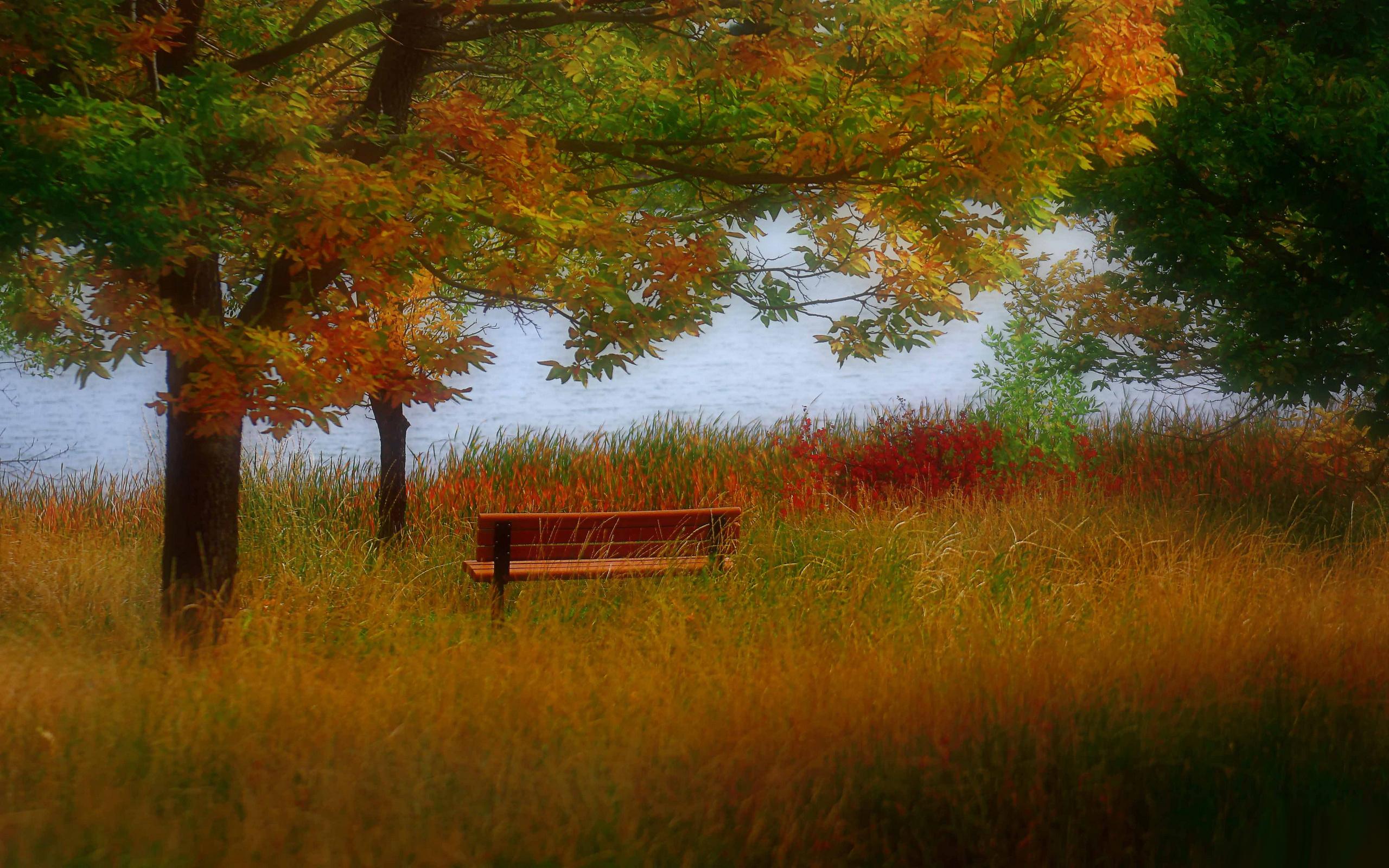 Обои дерево, лавочка, скамейка, трава