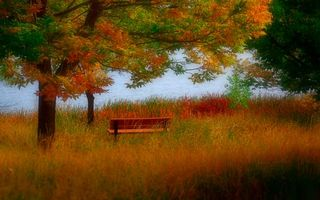 Фото бесплатно дерево, лавочка, скамейка, трава, поле, река, вода, листья, осень, природа