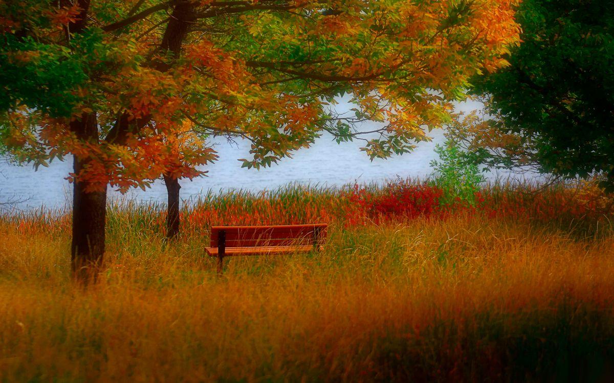 Фото бесплатно дерево, лавочка, скамейка, трава, поле, река, вода, листья, осень, природа, природа