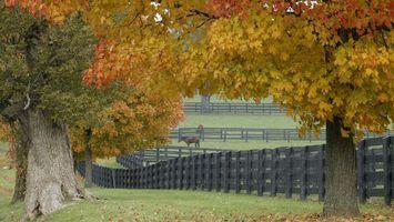 Бесплатные фото деревья,лошади,забор,трава,листья,осень,природа