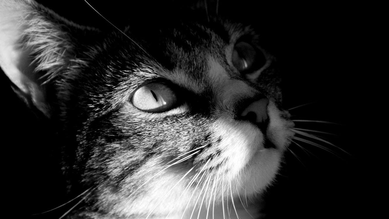 Фото бесплатно кошка, глаза, усы - на рабочий стол