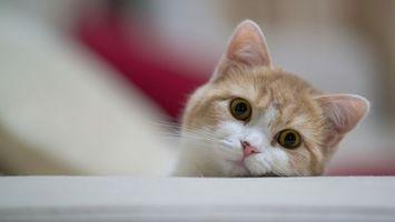 Фото бесплатно кот, выглядывает, морда