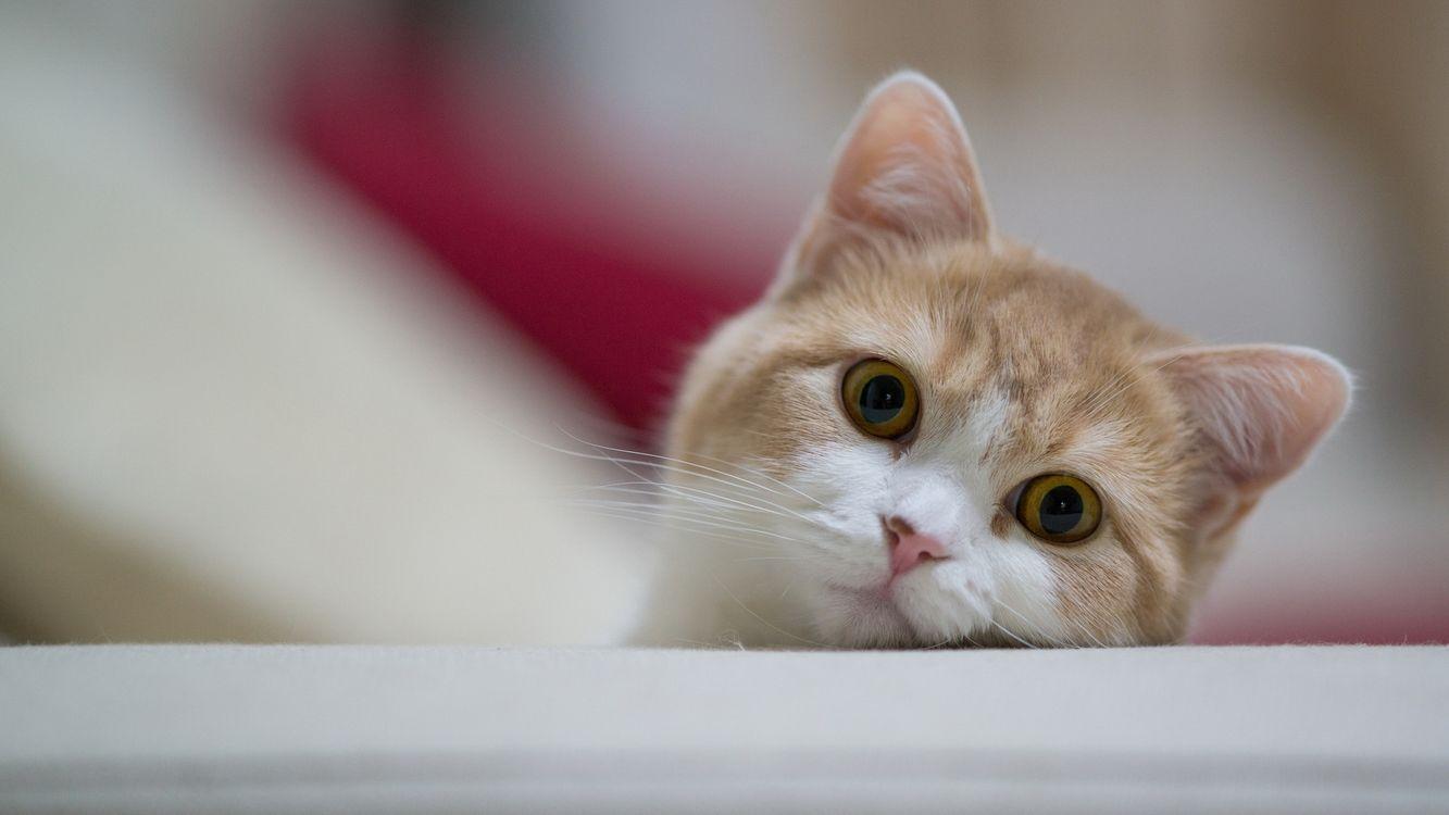 Фото бесплатно кот, выглядывает, морда - на рабочий стол