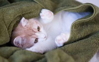 Заставки кот, котенок, лапы