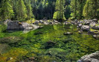 Заставки лес,деревья,елки,пруд,вода,камни,берег