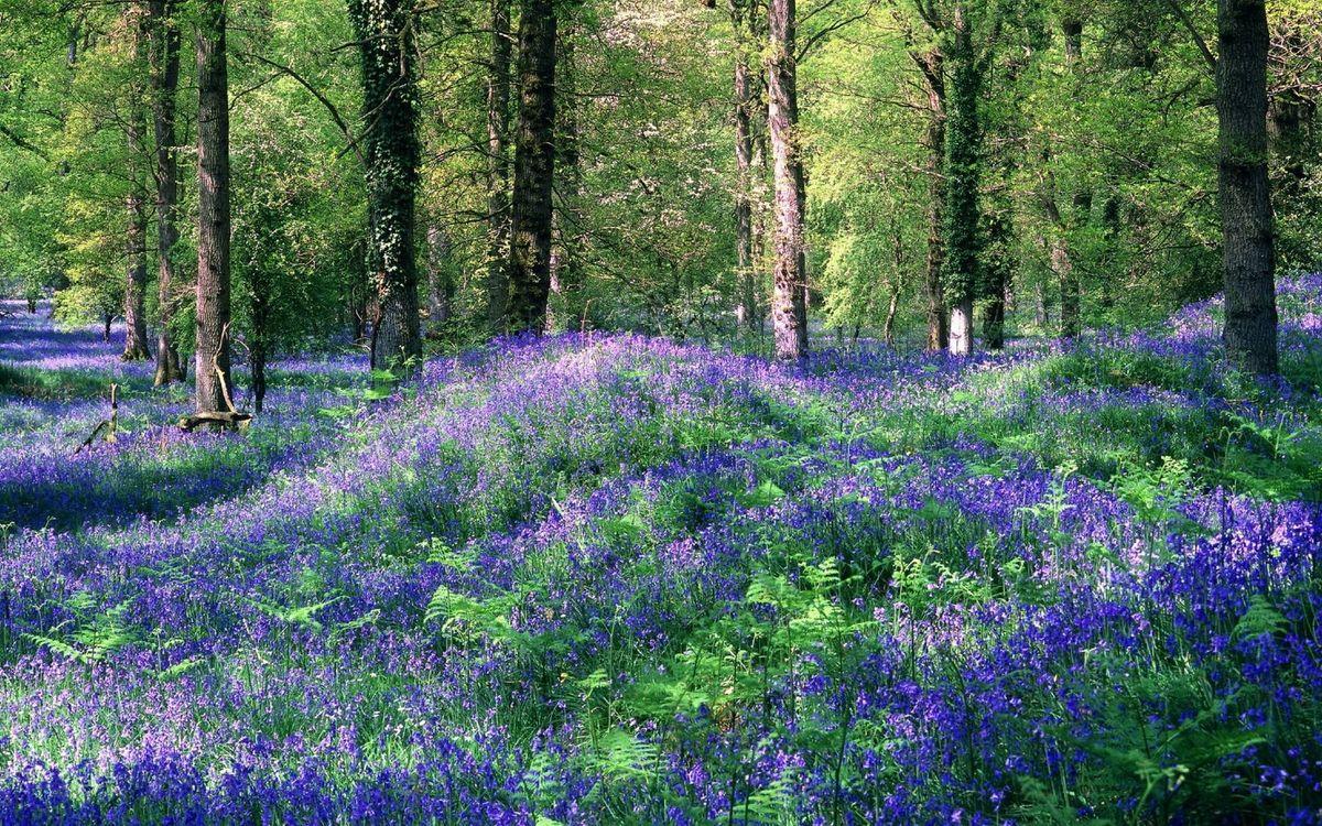 Фото бесплатно лето, лес, трава, цветы, поляна, деревья, природа