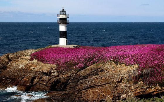 Бесплатные фото маяк,цветы,камни,небо,вода,океан,берег,пейзажи